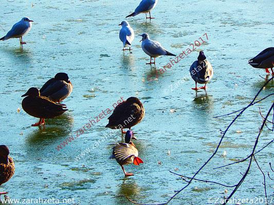Wintervögel auf Eisdecke