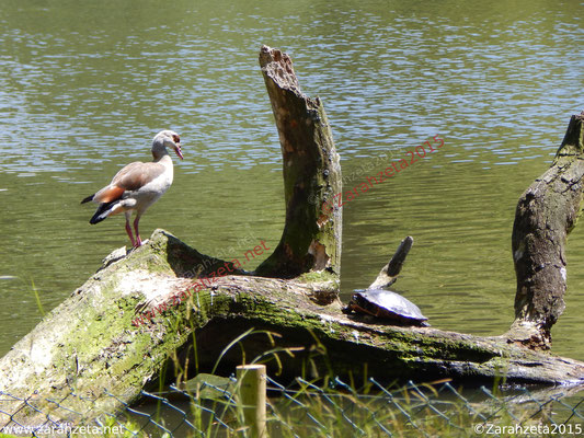 Zarahzetas Tiere Fotowand mit Vogel vs. Schildkröte