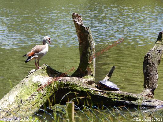 Vogel und Schildkröte auf einem Baumstamm