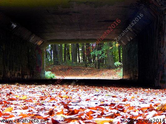 Einsamer Fußgängertunnel im Wald
