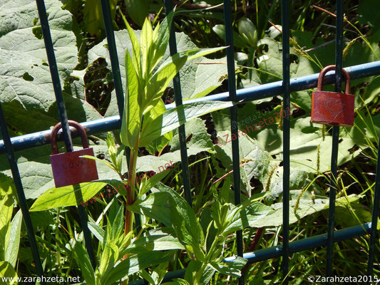Rote Schlossherzen am Zaun
