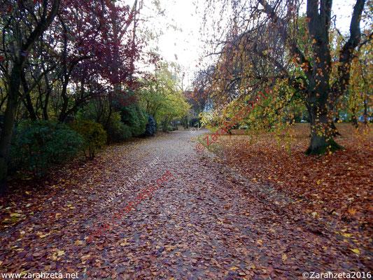 Herbstliches Matschwetter im Stadtpark mit nassem Laub