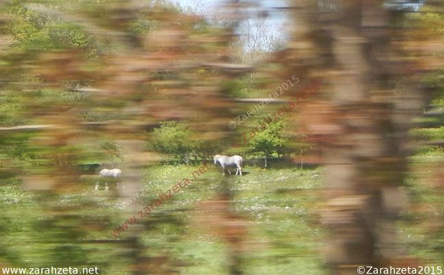 Zarahzetas Tiere Fotowand mit Momentaufnahme von Pferden