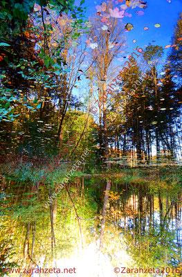 Wald mit See in Spiegelwelt
