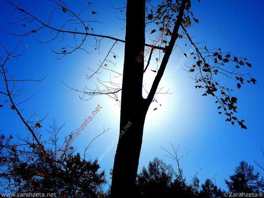 Baum in der Nacht bei Mondschein