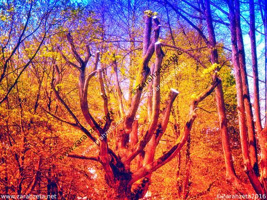 Bunter Kahlschlag - Gestutzter Baum als Naturkust im Fotorealismus