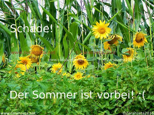 Sonnenblumen zum Sommersende