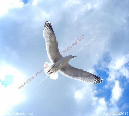 Fliegende Möwe als Freiheit