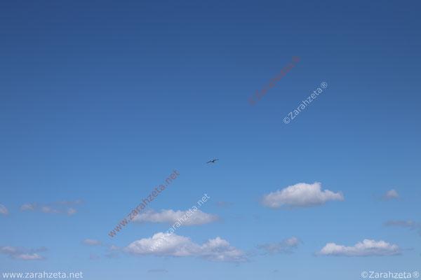 Zarahzetas Tiere Fotowand mit Möwe im Himmel über den Wolken