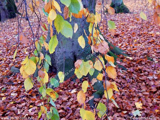 Herbststamm aus Baumstamm und Herbstblättern