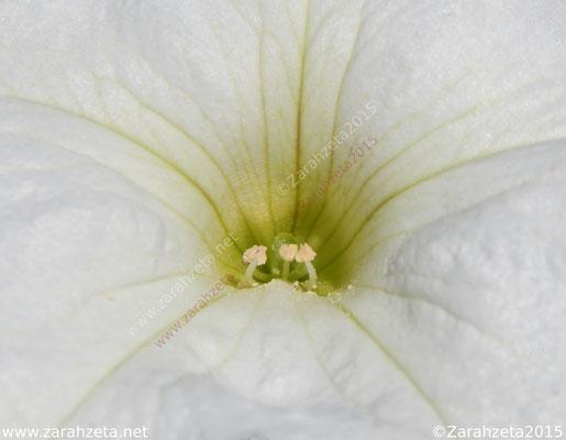 Einblicke in einen Blütenstempel durch Makrofotografie