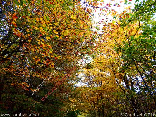 Farbige Baumkronen im Herbst
