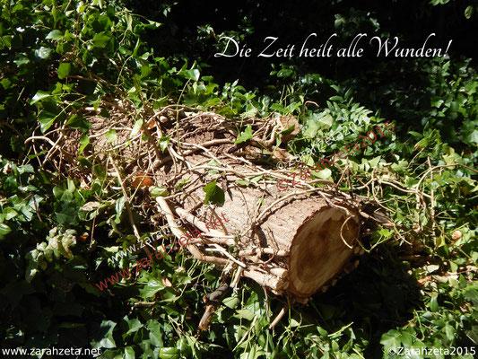 Gefällter Baumstamm als Symbol für Vergänglichkeit