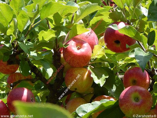 Zarahzetas Fotowand mit Essen & Trinken und Apfelzeit