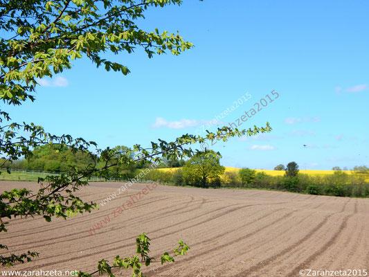Feld für Ackerbau und Viehzucht im Sommer