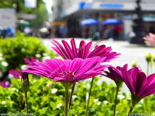 Pinke Kapkörbchen in der Einkaufsstraße