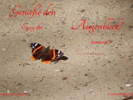 Schmetterling in der Sonne als Augenblick