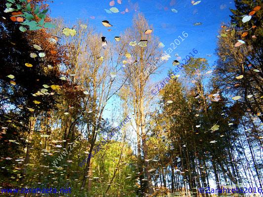 Spiegelung im Waldsee im Herbst als Spiegelwelt
