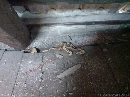Vogelskelett auf Fußboden