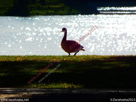 Zarahzetas Tiere Fotowand mit Gänse in der Abenddämmerung