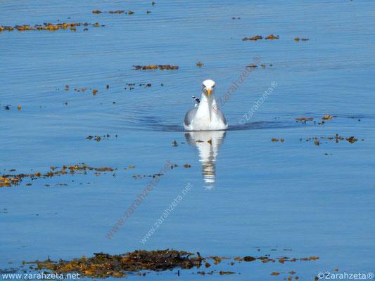 Zarahzetas Tiere Fotowand mit Möwe als U-Boot auf Kollisionskurs