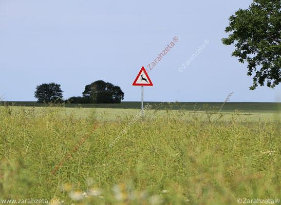 Straßenschild für Wildwechsel auf dem Land