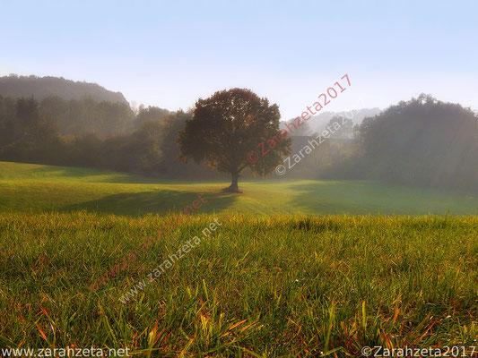 Baum im Nebel als Wunschbaum oder Zauberbaum
