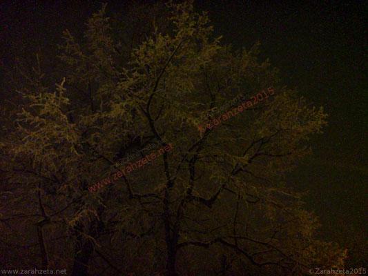 Verschneite Bäume in der Nacht im Winter