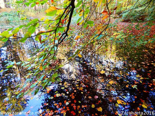 Laubsee aus Waldsee, Herbstlaub und Spiegelungen