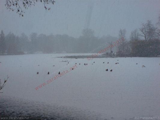 Zarahzetas Winter Fotowand mit Stadtpark im Schnee