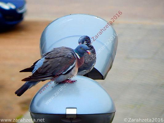 Zwei Tauben auf einer Straßenlaterne