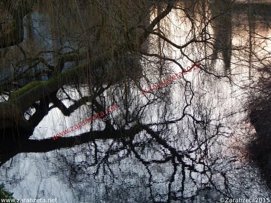 Spiegelung von Geästel in einem See