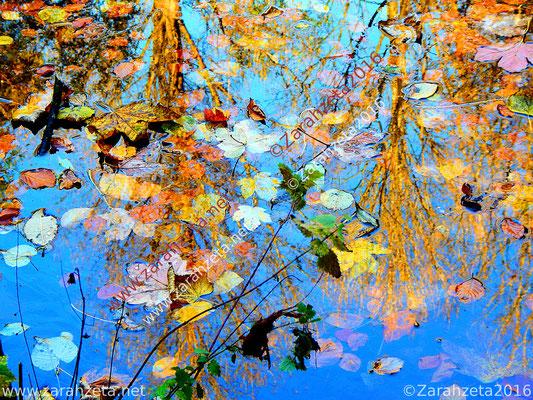 Laub-Art durch Wasserspiegelungen im Waldsee