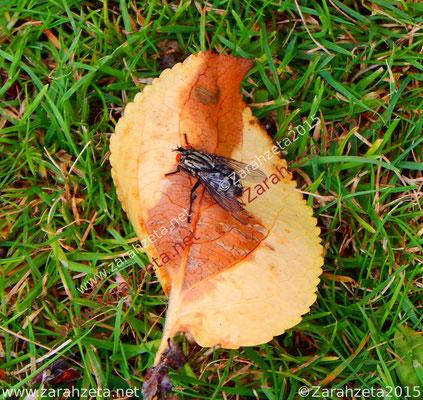 Zarahzetas Tiere Fotowand mit Fliege auf einem Blatt