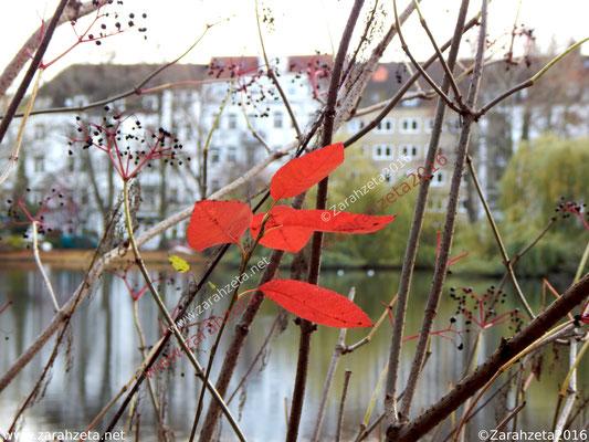 Zarahzetas Herbstfotos mit Herbststimmung in der Stadt