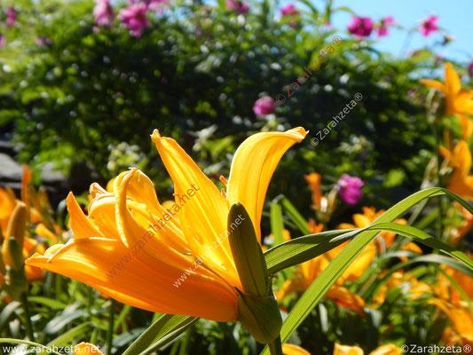 Bunte Blumen als Symbol für Sommer