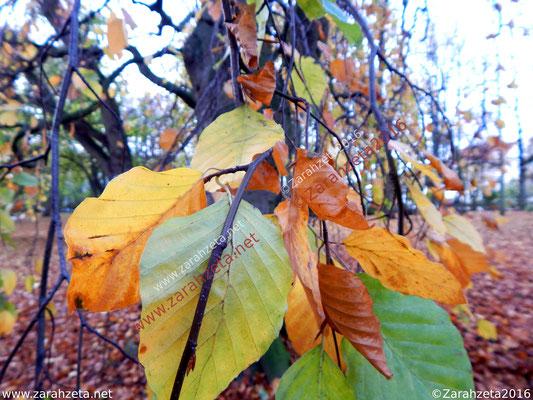 Herbstblätter am Ast in Makroaufnahme