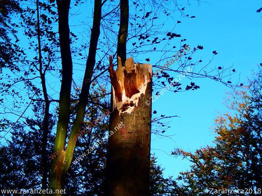 Lichtblick auf abgeknickten Baumstamm als Sturmschaden