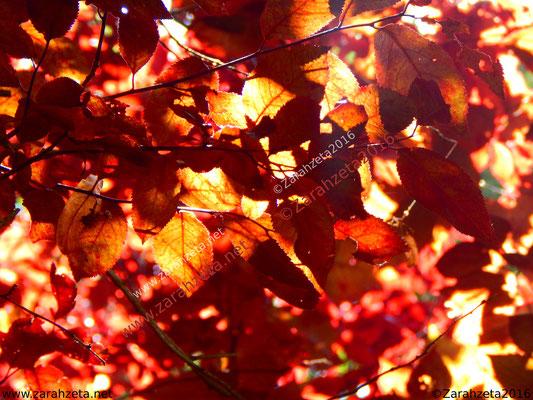 Herbstfarben eines Blätterdaches im Wald