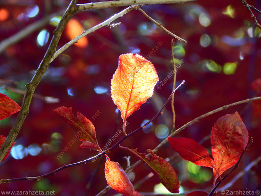 Herbstblätter an einem Baum