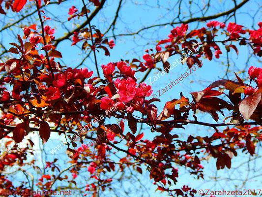 Zarahzetas Naturfotos mit Rote Zierquitte