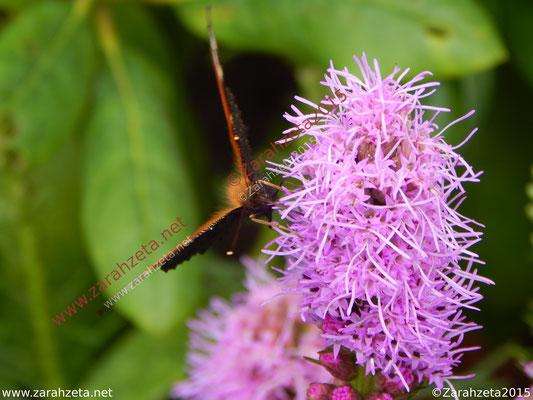 Zarahzetas Tiere Fotowand mit Tagfalter und pinke Blume