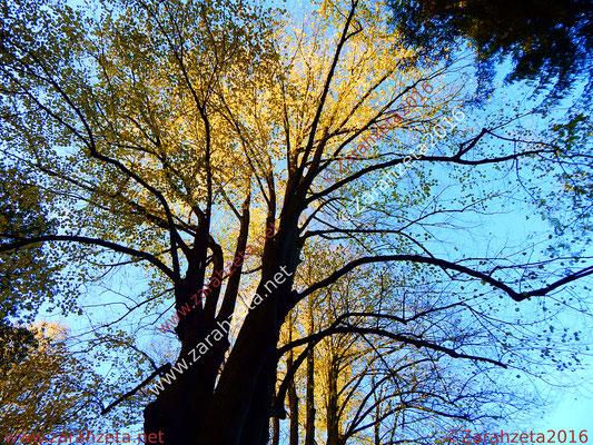 Hohe beleuchtete Baumkronen im Wald als Baumpower