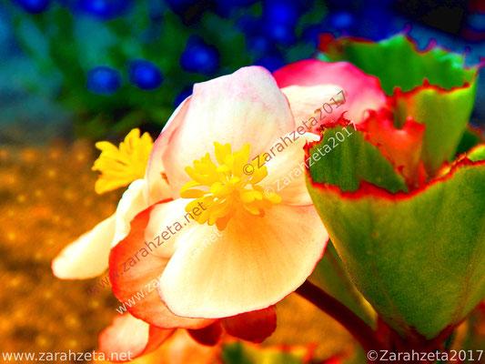 Bunte Zauberwelt mit bunten Blumen