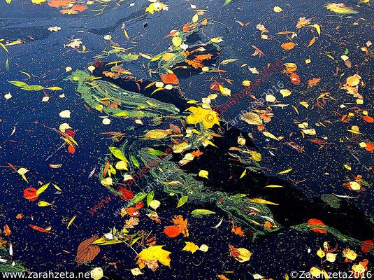 Laubmalerei mit Entengrütze oder Wasserlinse als Fotorealismus