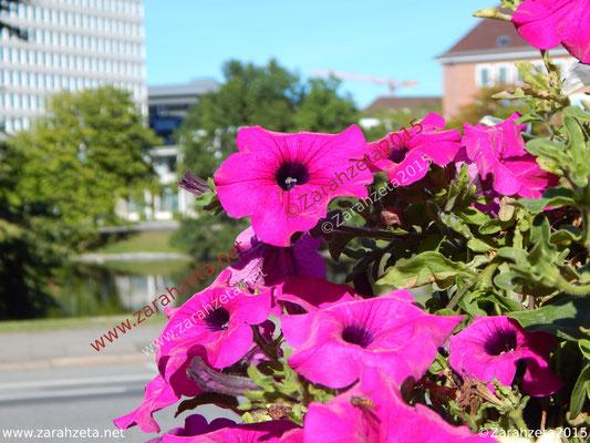 Pinke Stadtblumen