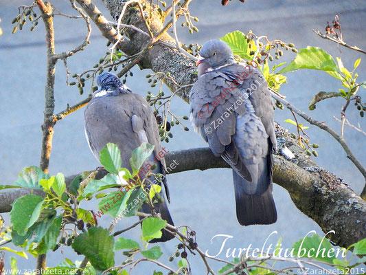 Taubenpärchen als Liebessymbol