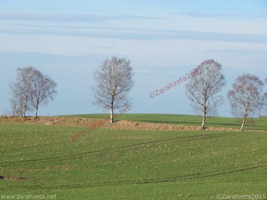 Kahle Bäume im Winter auf dem flachen Land