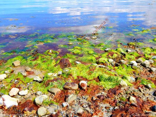 Natürliches Farbenspiel mit Algen am Strand