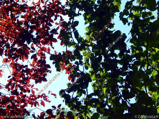 Naturmuster aus rotem und grünem Laub